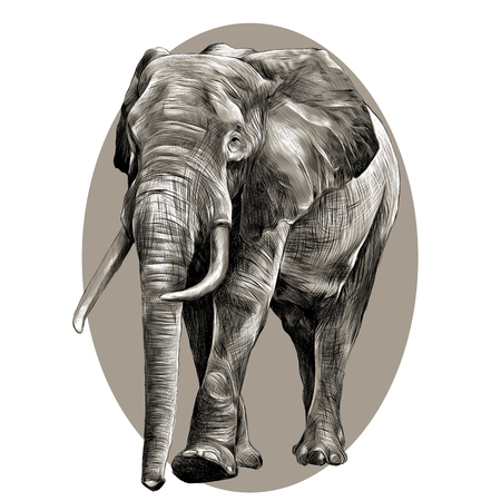 elephant in full growth, moving forward, sketch graphics vector black and white pattern on the grey oval circle Illustration
