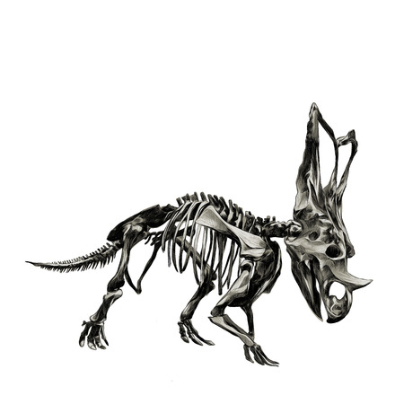 The skeleton of the dinosaur Triceratops, color image, sketch vector.