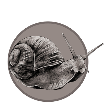the snail sketch vector graphics, black and white pattern on a brown background circle