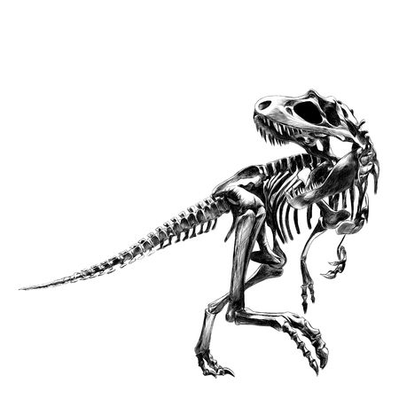 Dinosaurus skelet Tyrannosaurus, bot, zwart-witte tekening, tekeningen, schets, vector Stock Illustratie