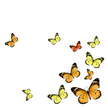 A butterflies scatter in different directions, color picture vector, assorted colors, orange, red and yellow.