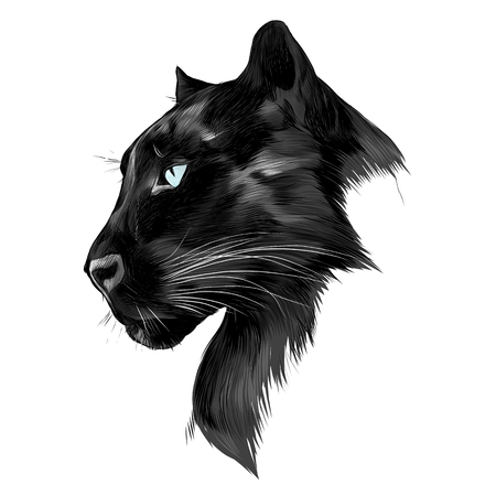 The head is black Panther's profile looking into the distance, graphics sketch vector black and white drawing.