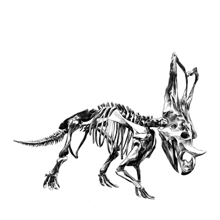 stegosaurus: The skeleton of the dinosaur Triceratops, a black and white drawing, sketch vector. Vectores