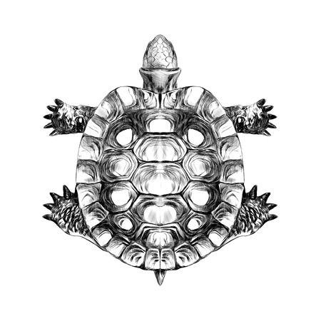 Turtle top, carapace, crawling, sketch, vector, black and white drawing.