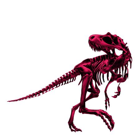 공룡 골격 티라노 사우루스, 뼈의 그림을 그린 색, 그림, 스케치, 벡터 핑크색입니다.