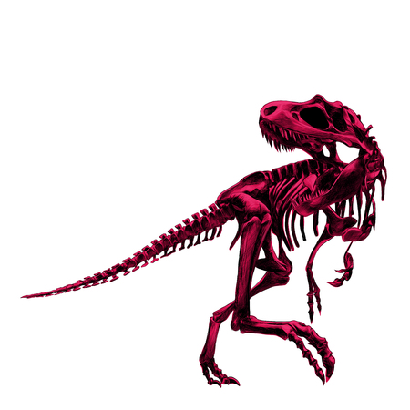 dinosaur skeleton Tyrannosaurus, painted a picture of the bone is pink in color , drawing, sketch, vector