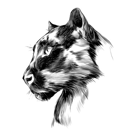 La cabeza es el perfil de pantera negro mirando en la distancia, dibujo de gráficos vectoriales dibujo en blanco y negro. Foto de archivo - 74346753
