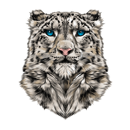 the head of the snow leopard, full face, symmetry, color drawing, sketch, vector, graphic, blue eyes