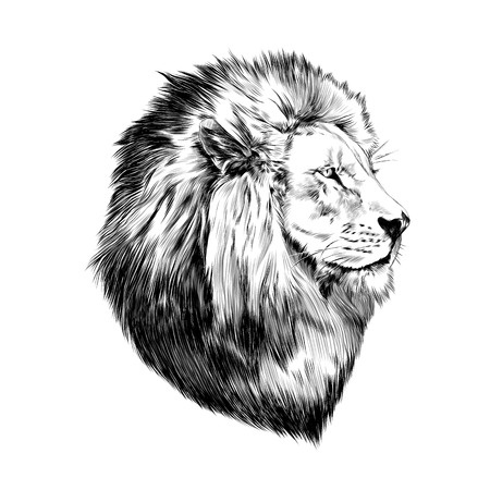 lion proud, face in profile, looking into the distance, sketch, vector, black-and-white drawing
