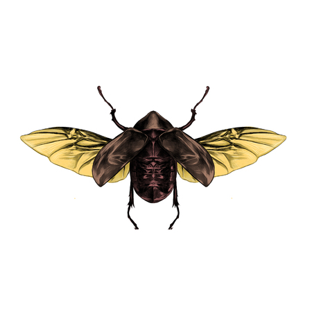 Artistic design of a beetle with open wings top view, symmetric, flies, sketch, vector, graphic,  colored drawing. Stok Fotoğraf - 74346890