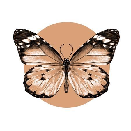 Papillon avec des ailes ouvertes vue de dessus, le dessin symétrique, croquis de graphiques vectoriels motif noir et blanc sur un cercle de fond beige Banque d'images - 74346923