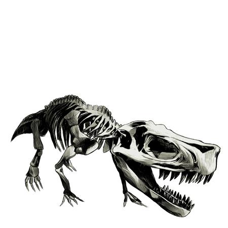 dinosaur skeleton Tyrannosaurus , graphics sketch vector, color illustration Illustration