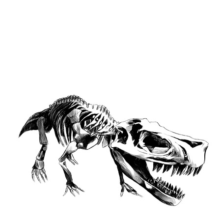 dinosaur skeleton Tyrannosaurus , graphics sketch vector black and white drawing