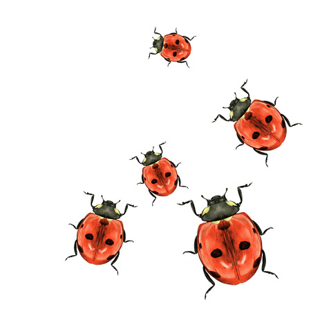 many ladybirds scatter in different directions top view color drawing sketch vector