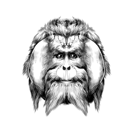 head hairy orangutan symmetry, graphics sketch vector black and white drawing