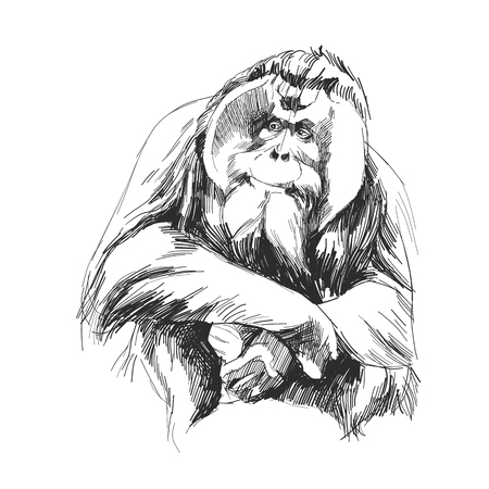 hairy orangutan in full growth sits on his haunches, graphics sketch vector quick drawing