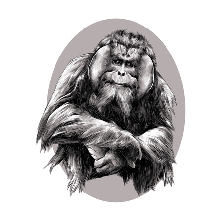 hairy orangutan in full growth sits on his haunches, graphics sketch vector black and white pattern on a brown background beige oval circle