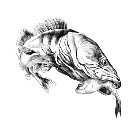 brochet de poissons prédateurs capturés et tient dans sa bouche un petit poisson mort, graphiques vectoriels croquis dessin noir et blanc Vecteurs