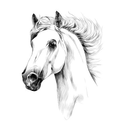 Gráficos de vector de bosquejo de perfil de cabeza de caballo Foto de archivo - 74392721