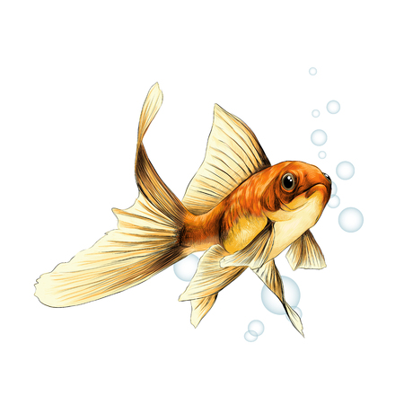 goldfish sketch vector graphics color picture on the background of the air bubbles