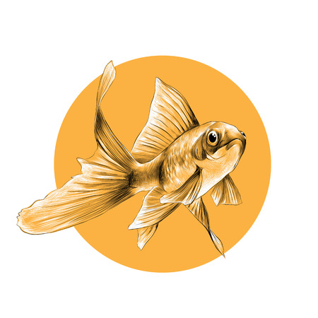 Goldfish esquisser des graphiques vectoriels motif noir et blanc sur le fond d'un cercle jaune