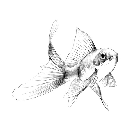 Goldfish Sketch Vector Graphics Color Drawing Of A Yellow Orange ...