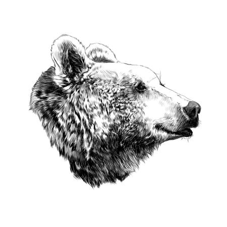 거리를 바라 보는 곰의 머리 프로필, 벡터 그래픽, 흑백 패턴 스케치 일러스트