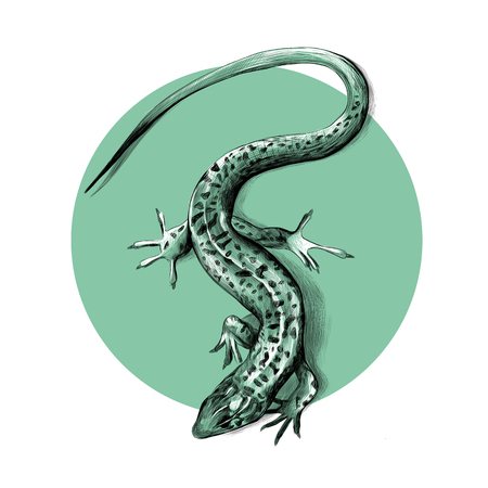 Lizard top view crawling, sketch vector graphics black and white pattern on the background of green circle Illustration