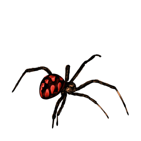 hairy legs: Spider with a big belly crawls, sketch vector graphics, colored pattern with red spots Illustration