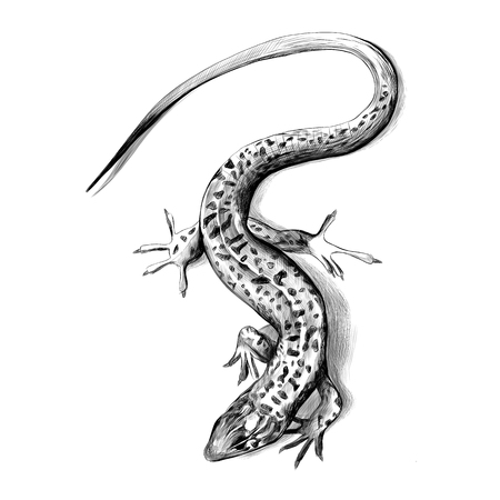 Lizard top view crawling, sketch vector graphics black and white drawing