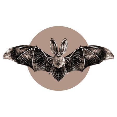 Batti con il modello simmetrico delle ali aperte, lo schizzo, la grafica vettoriale, modello in bianco e nero su un cerchio marrone del fondo