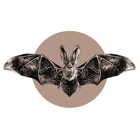 Bat with open wings symmetrical pattern, sketch, vector graphics, black and white pattern on a brown background circle