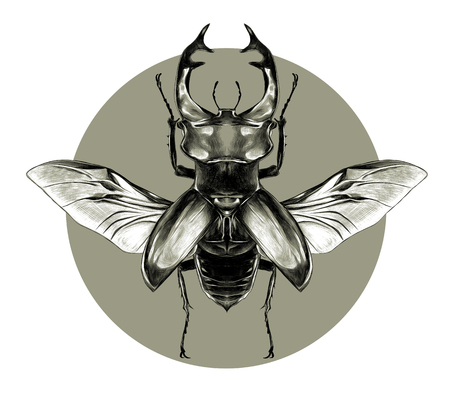 Stag beetle with open wings flying, top view of symmetry, sketch vector graphics, black and white pattern on the background of green circle.