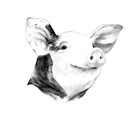 Creative design of a black and white head of spotted pig, sketch vector graphics black and white drawing