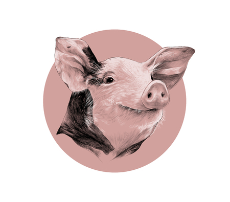 Creative design of a pink head of spotted pig, sketch vector graphics black and white pattern on a background of pink circle Vectores