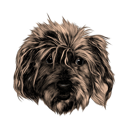 A head shaggy dog funny, sketch vector graphics color picture