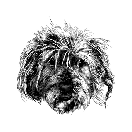 Cute head shaggy dog funny, sketch vector graphics black and white drawing