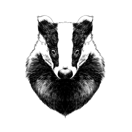head badger symmetric, sketch vector graphics black and white drawing Illustration