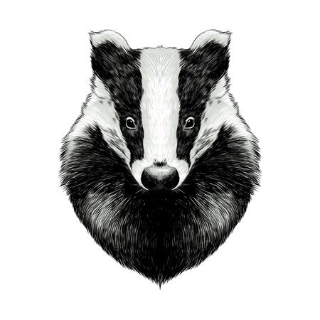 head badger symmetric, sketch vector graphics color picture