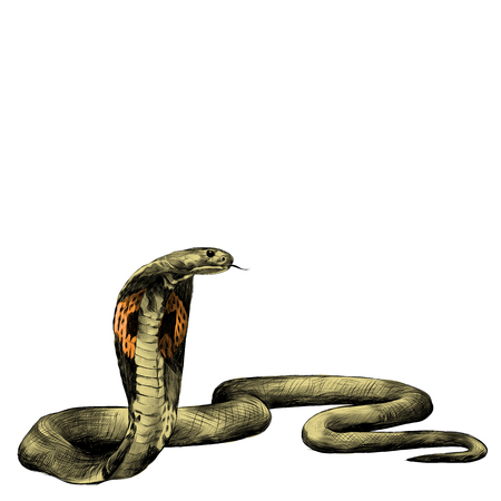 colorized: snake spectacled Cobra crawling, sketch vector graphics color picture