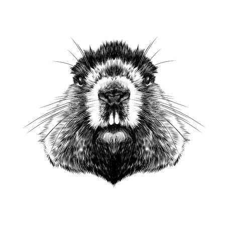 head Groundhog hairy symmetric, sketch vector graphics black and white drawing