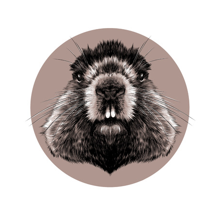 head Groundhog hairy symmetric, sketch vector graphics black and white pattern