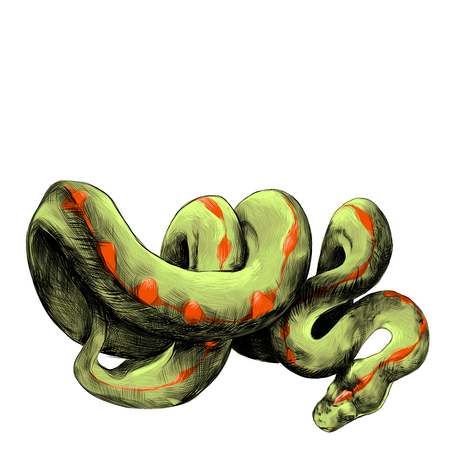 colorized: the snake twisted thick sketch vector graphics color picture Illustration