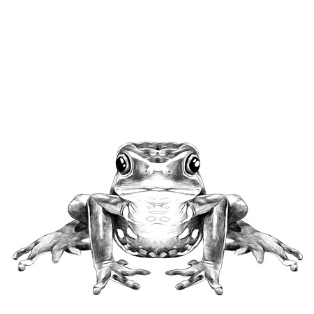 the frog sits symmetrical sketch vector graphics black and white drawing Фото со стока - 75395444