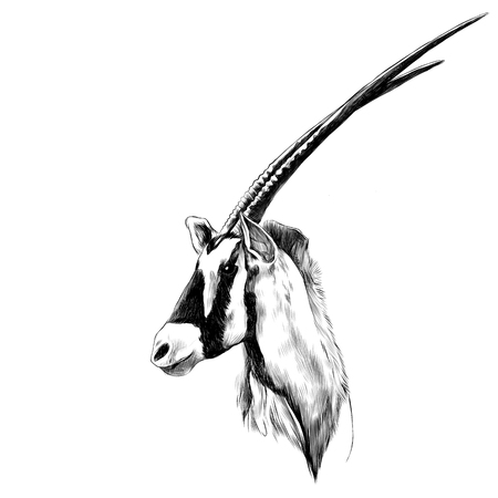 Antelope head profile looking to the side sketch vector graphics black and white drawing