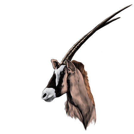 Antelope head profile looking to the side sketch vector graphics color picture Фото со стока - 75632177