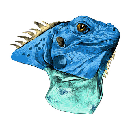 Head iguana profile, sketch vector graphics color image, blue color. Illustration