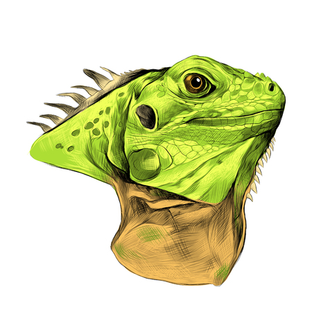 Head iguana profile, sketch vector graphics color drawing, green and brown color.