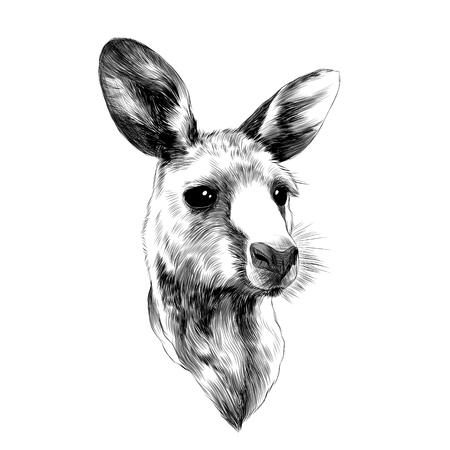 재미 귀여운 아기 캥거루 머리 스케치 벡터 그래픽 흑백 드로잉