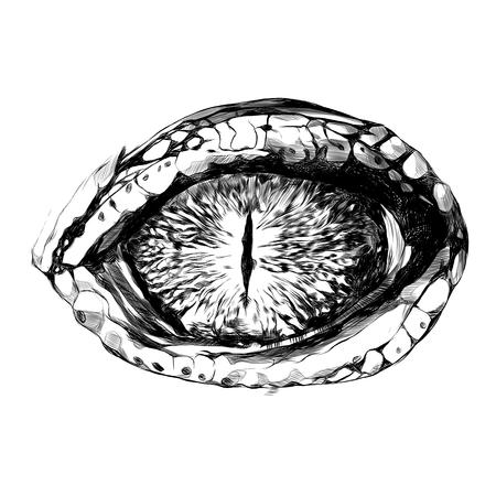 oko krokodyla lub gada zbliżenie, szkic grafiki wektorowej czarno-biały rysunek